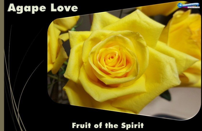picture of yellow rose for agape love